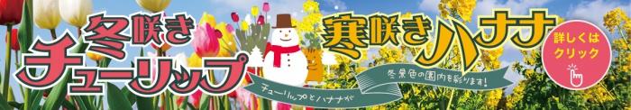 冬咲きチューリップと寒咲きハナナ