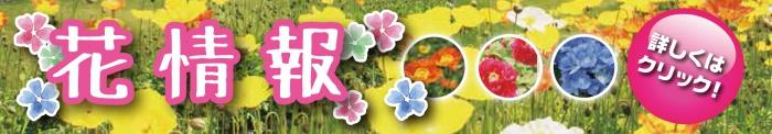 春のお花情報