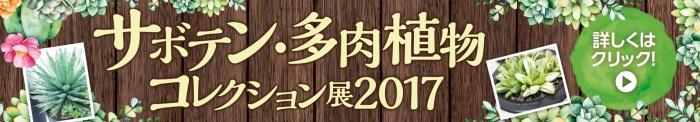 サボテン・多肉植物コレクション展2017